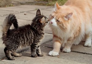 kitten and cat meet | Ultimate Pet Nutrition