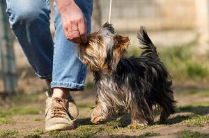 puppy training   Ultimate Pet Nutrition