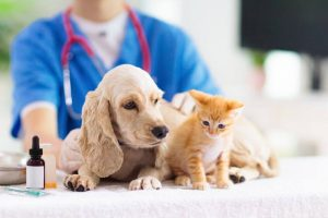 vet check up | Ultimate Pet Nutrition