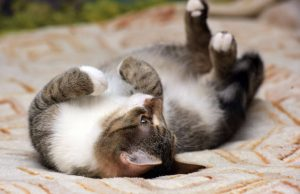 cate belly up | Ultimate Pet Nutrition