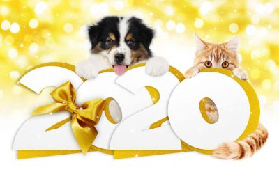 Make A Pet Resolution For Your Furry Friend This Year (It's Not Too Late)