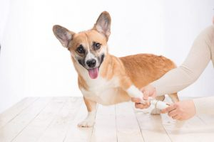how long should dog nails be | Ultimate Pet Nutrition