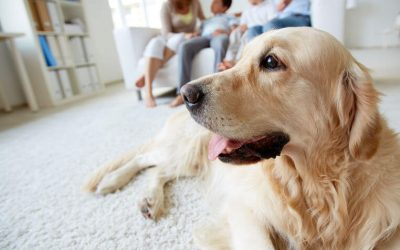 How To Foster A Dog For A Month Or More: Become A Pet Fosterer