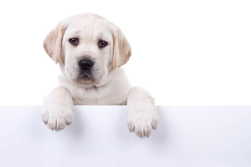 Dog Nail Trims: How Long Should Dog Nails Be?