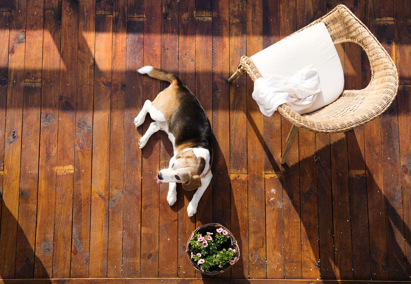 Neutralizing Pet Odors: How To Get Rid Of Dog Smell In House
