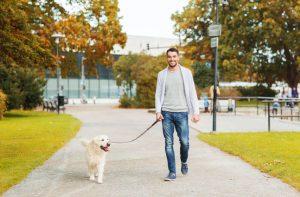 walking dog | Ultimate Pet Nutrition