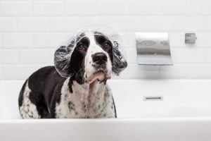dog in bath with shower cap | Ultimate Pet Nutrition