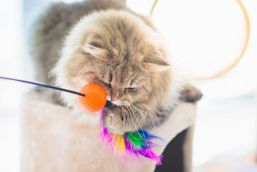 cat with toy | Ultimate Pet Nutrition