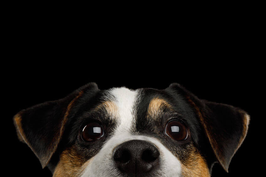 Dog Eye Discharge: What Is Normal And What Should You Be Concerned About?