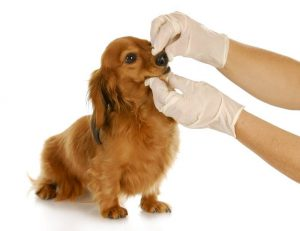 doggy smell | Ultimate Pet Nutrition