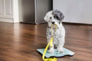 dog on scale | Ultimate Pet Nutrition