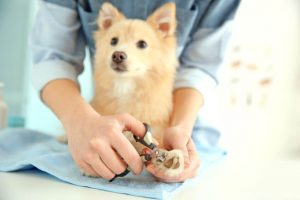 trim dog nails | Ultimate Pet Nutrition