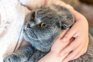 cat being snuggled | Ultimate Pet Nutrition