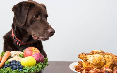 Your Dog's Diet: Are Dogs Carnivores Or Omnivores?