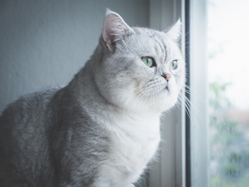 How Long Can You Leave A Cat Alone? Info For Cat Parents