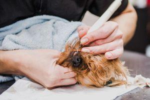 dental ultrasound | Ultimate Pet Nutrition