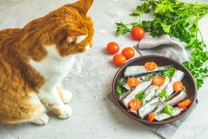 feeding your cat | Ultimate Pet Nutrition