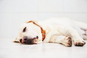 dog not feeling well | Ultimate Pet Nutrition