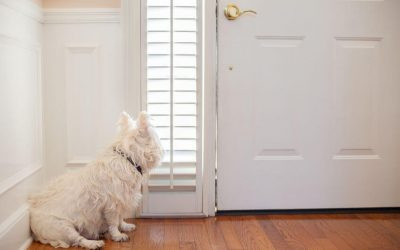 dog waiting at door | Ultimate Pet Nutrition