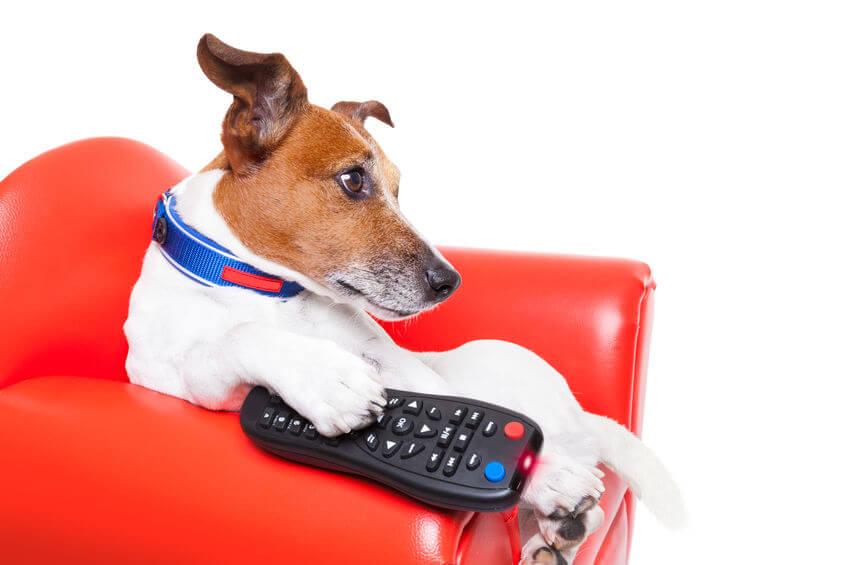 dog entertainment | Ultimate Pet Nutrition