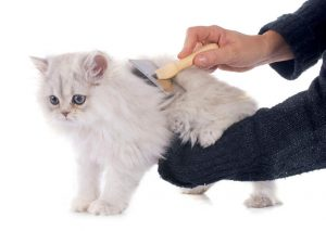 brushing cat | Ultimate Pet Nutrition