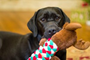 how to keep dog entertained while at work | Ultimate Pet Nutrition