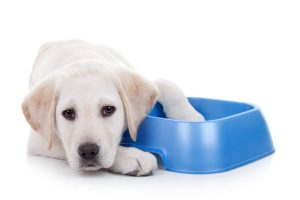 dog on diet | Ultimate Pet Nutrition