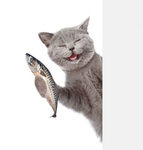 cat with fish | Ultimate Pet Nutrition