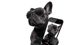 trendy dog with cell phone | Ultimate Pet Nutrition