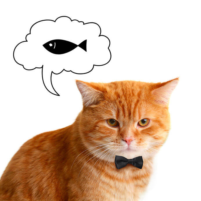 can cats eat sardines   Ultimate Pet Nutrition