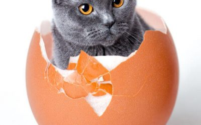 Can Cats Eat Hard Boiled Eggs? How About Dogs? Human Food In Your Furry Friend's Diet