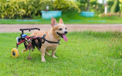 Helpful Tips To Care For A Dog With Three Legs: Quality Of Life For Your Dog
