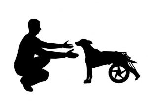 dog with wheelchair | Ultimate Pet Nutrition