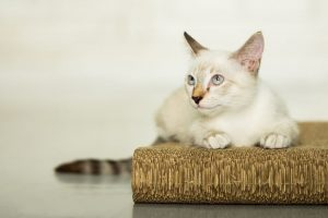 cat scratching board | Ultimate Pet Nutrition