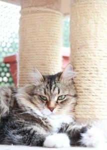 cat scratching post | Ultimate Pet Nutrition