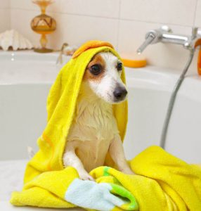 dog bathing | Ultimate Pet Nutrition