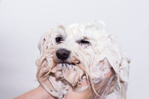 dog shampoo | Ultimate Pet Nutrition