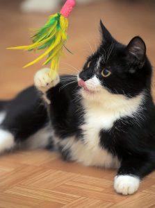 flirt pole for cats | Ultimate Pet Nutrition