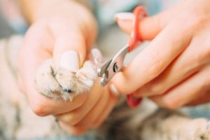 trimming cat nails | Ultimate Pet Nutrition