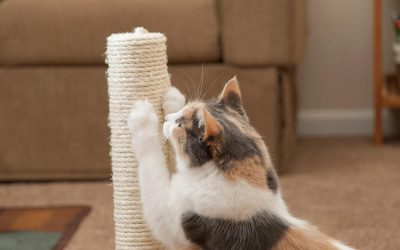 Why Do Cats Scratch? And Why Is A Scratching Post An Essential In Any Cat Home?