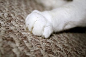 why do cats scratch | Ultimate Pet Nutrition