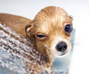 why do dogs go crazy after a bath | Ultimate Pet Nutrition