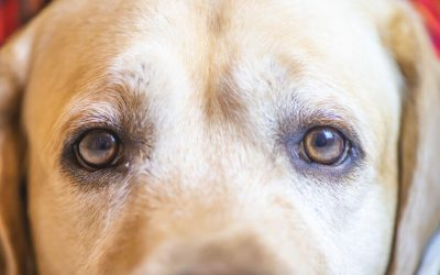 Can Dogs See Any Colors or Are They Totally Color Blind?