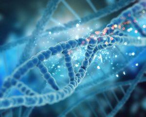 DNA concept   Ultimate Pet Nutrition