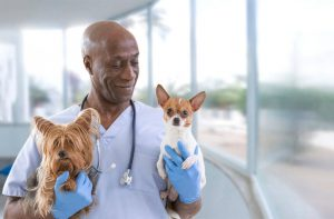 little dogs with vet   Ultimate Pet Nutrition