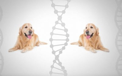 Dog DNA Test Accuracy: What You Should Know About Canine Genetic Testing