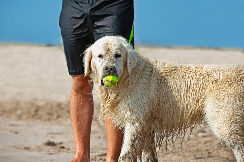 beach activities | Ultimate Pet Nutrition