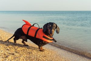 beach activity | Ultimate Pet Nutrition