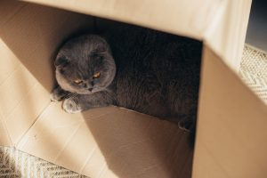 cat in box | Ultimate Pet Nutrition
