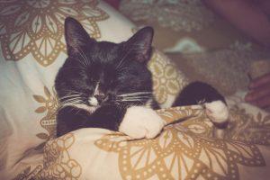 cat sleeping in bed | Ultimate Pet Nutrition